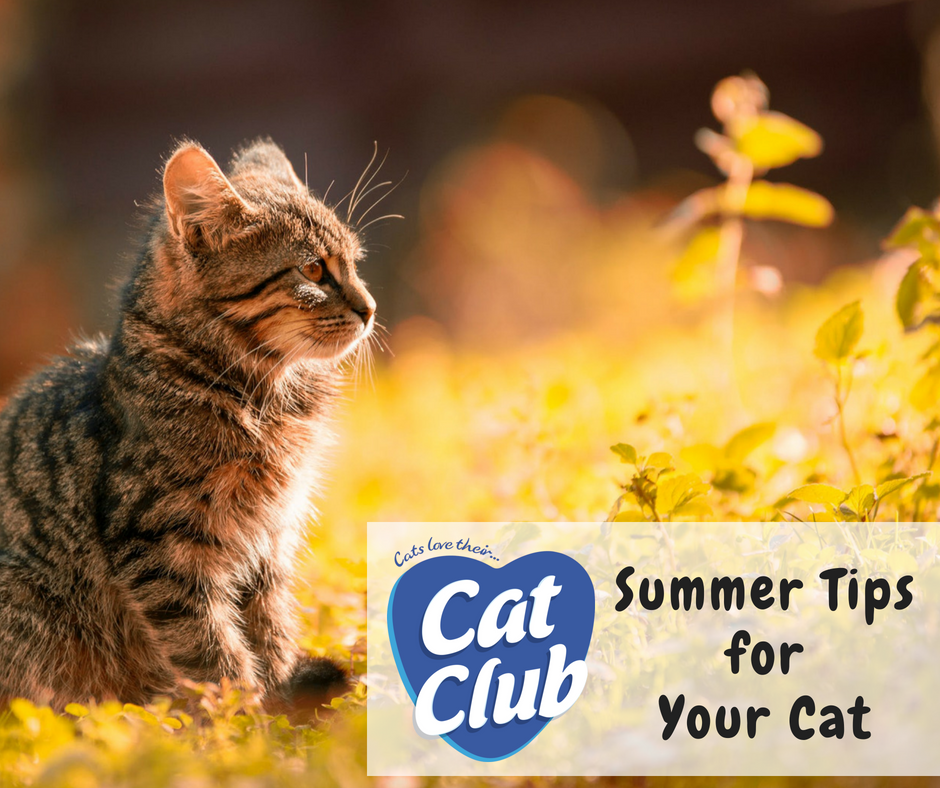 Care for your Cat in the Summer