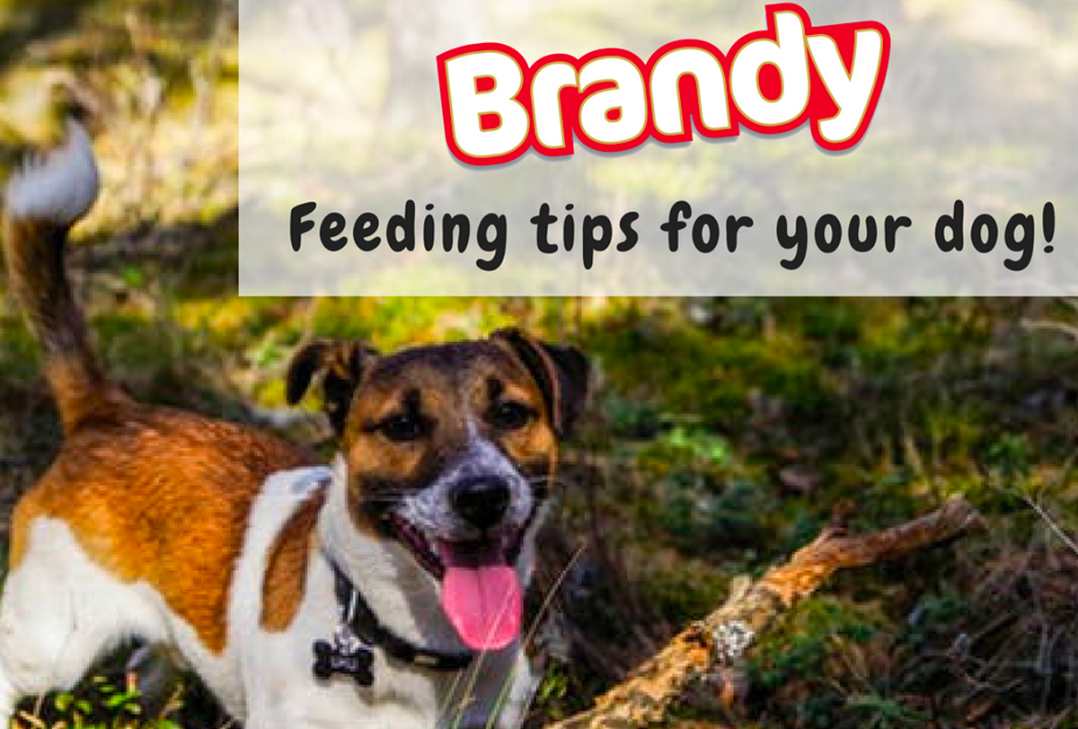 Feeding tips for your dog!