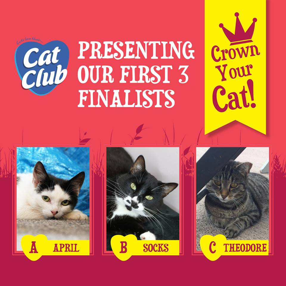 Announcing the First Round Finalists of our Crown Your Cat Competition!