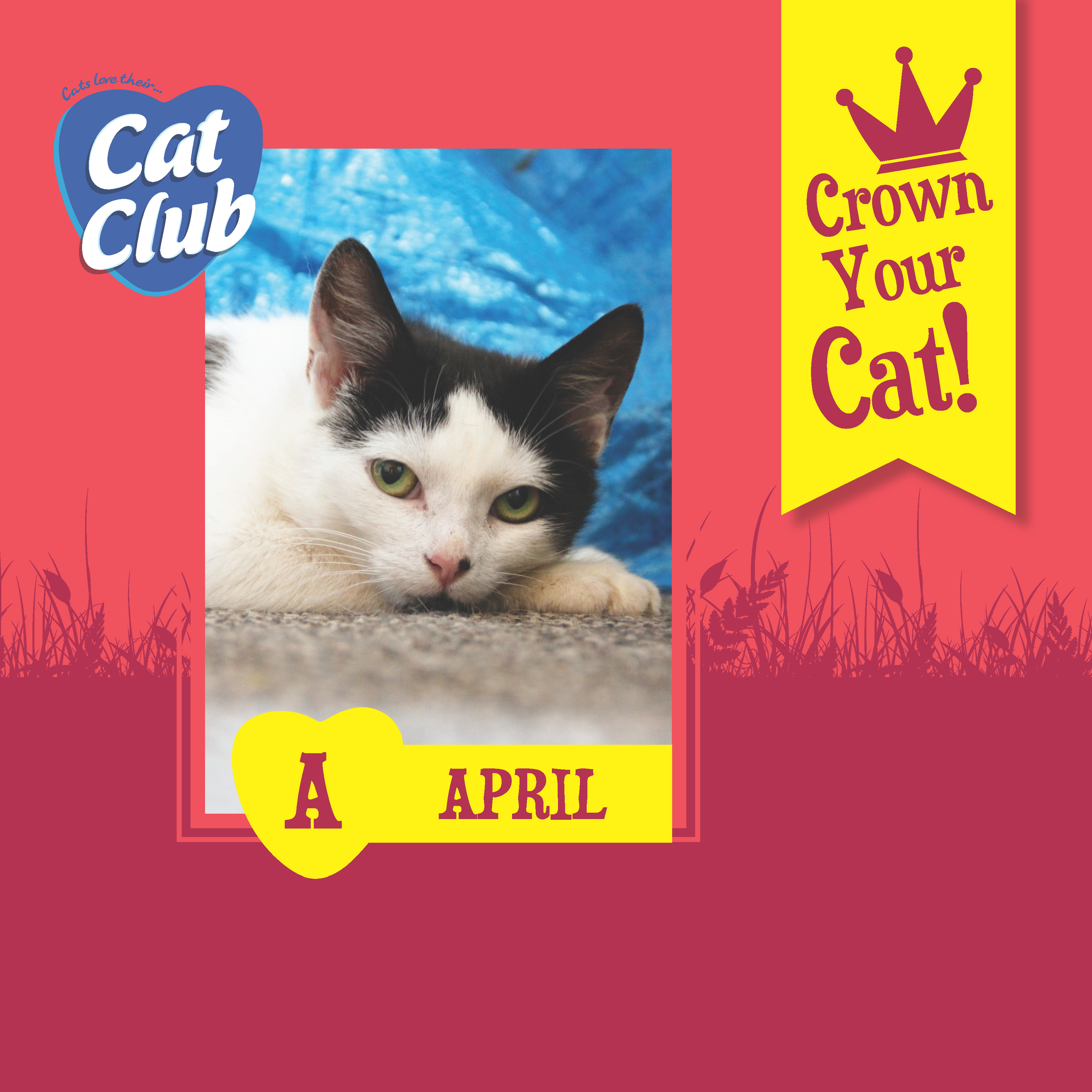 Introducing our First Cat Club Finalist.. April!