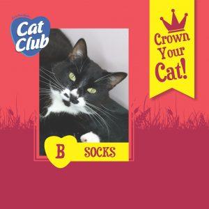 Cat Club Finalist Socks