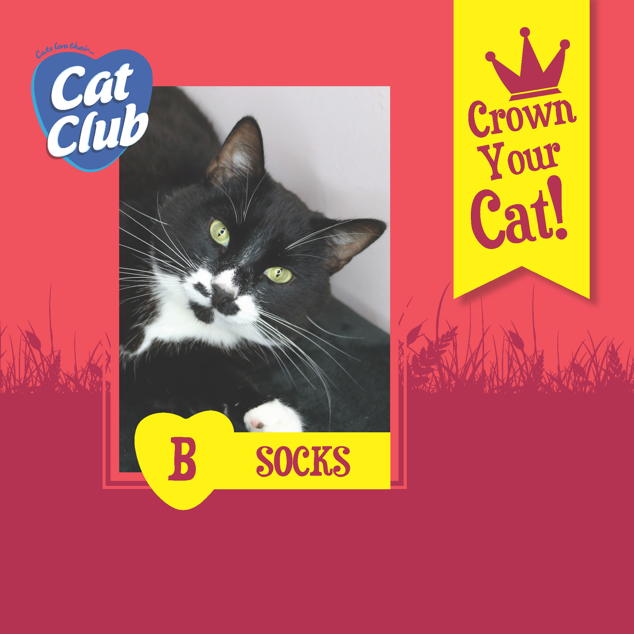 Introducing our Second Cat Club Finalist.. Socks!