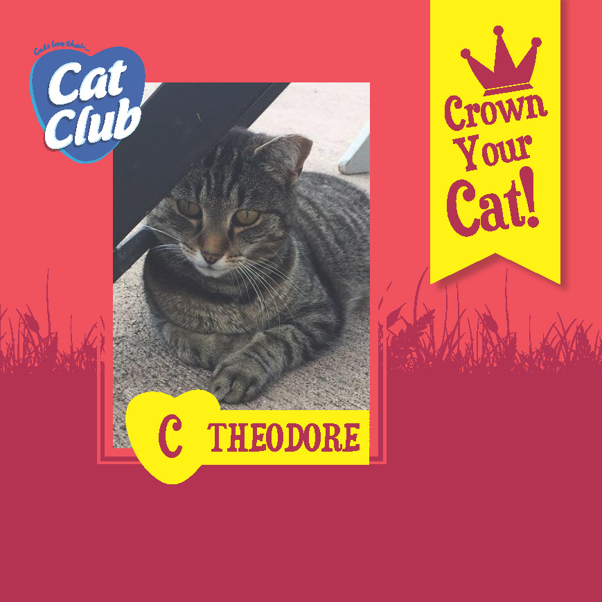 Introducing our Third Cat Club Finalist.. Theodore!