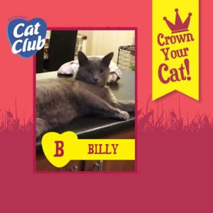 Billy Cat Club Finalist