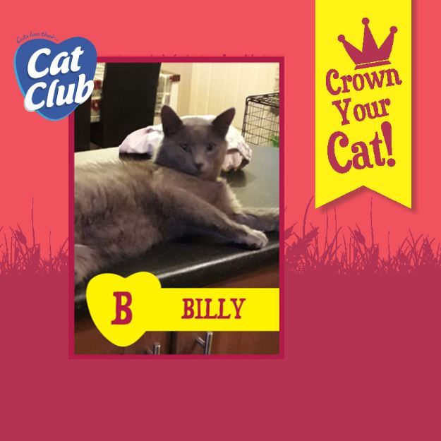 Introducing our Fifth Cat Club Finalist… Billy!