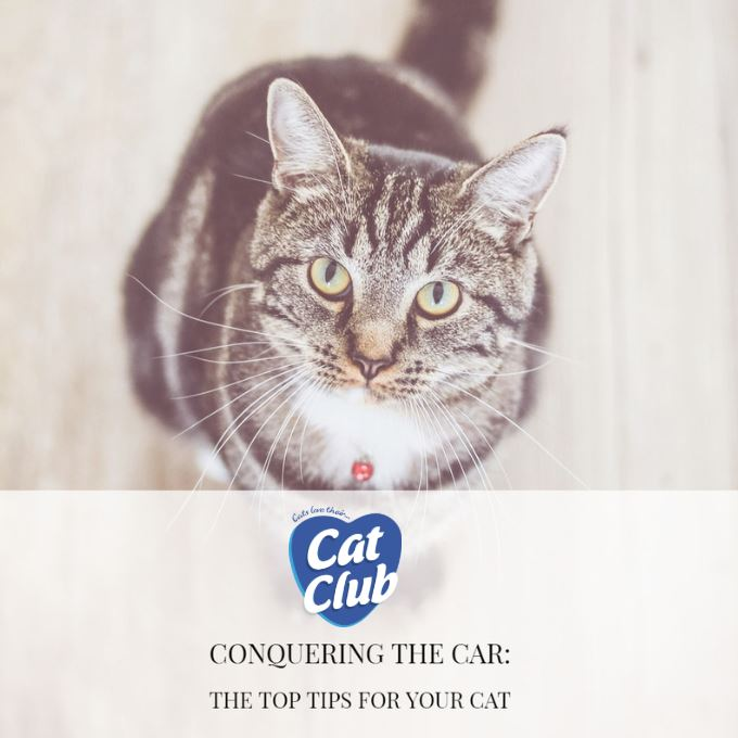 Conquering the Car: The Top Tips for Your Cat