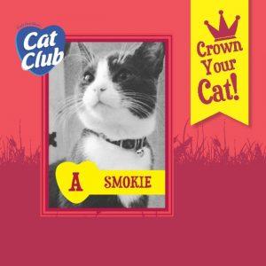 Smokie Cat Club Finalist