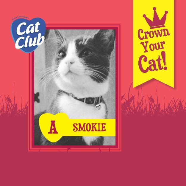 Introducing our sixth Cat Club finalist… Smokie!