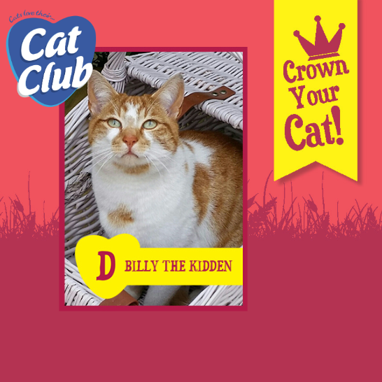 Introducing our fifteenth Cat Club finalist… Billy the Kidden!