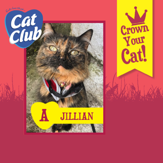 Introducing our tenth Cat Club finalist… Jillian!