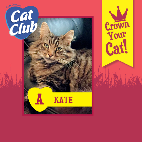 Introducing our twelfth Cat Club finalist… Kate!