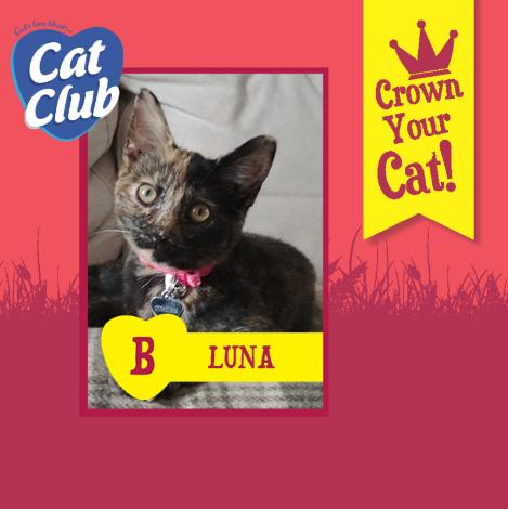 Introducing our eighth Cat Club finalist… Luna!