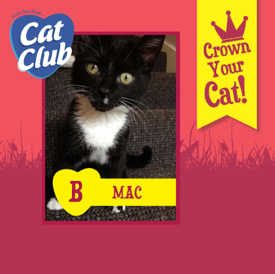 Introducing our thirteenth Cat Club finalist… Mac!