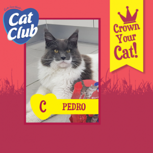 Pedro Cat Club Finalist