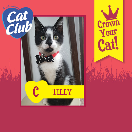 Introducing our eleventh Cat Club finalist… Tilly!