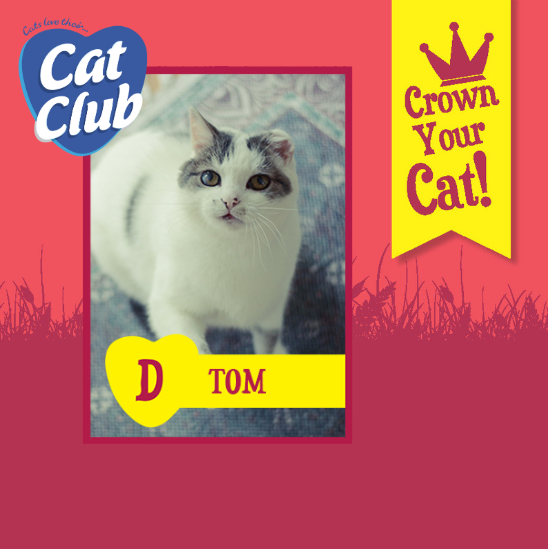 Introducing our ninth Cat Club finalist… Tom!