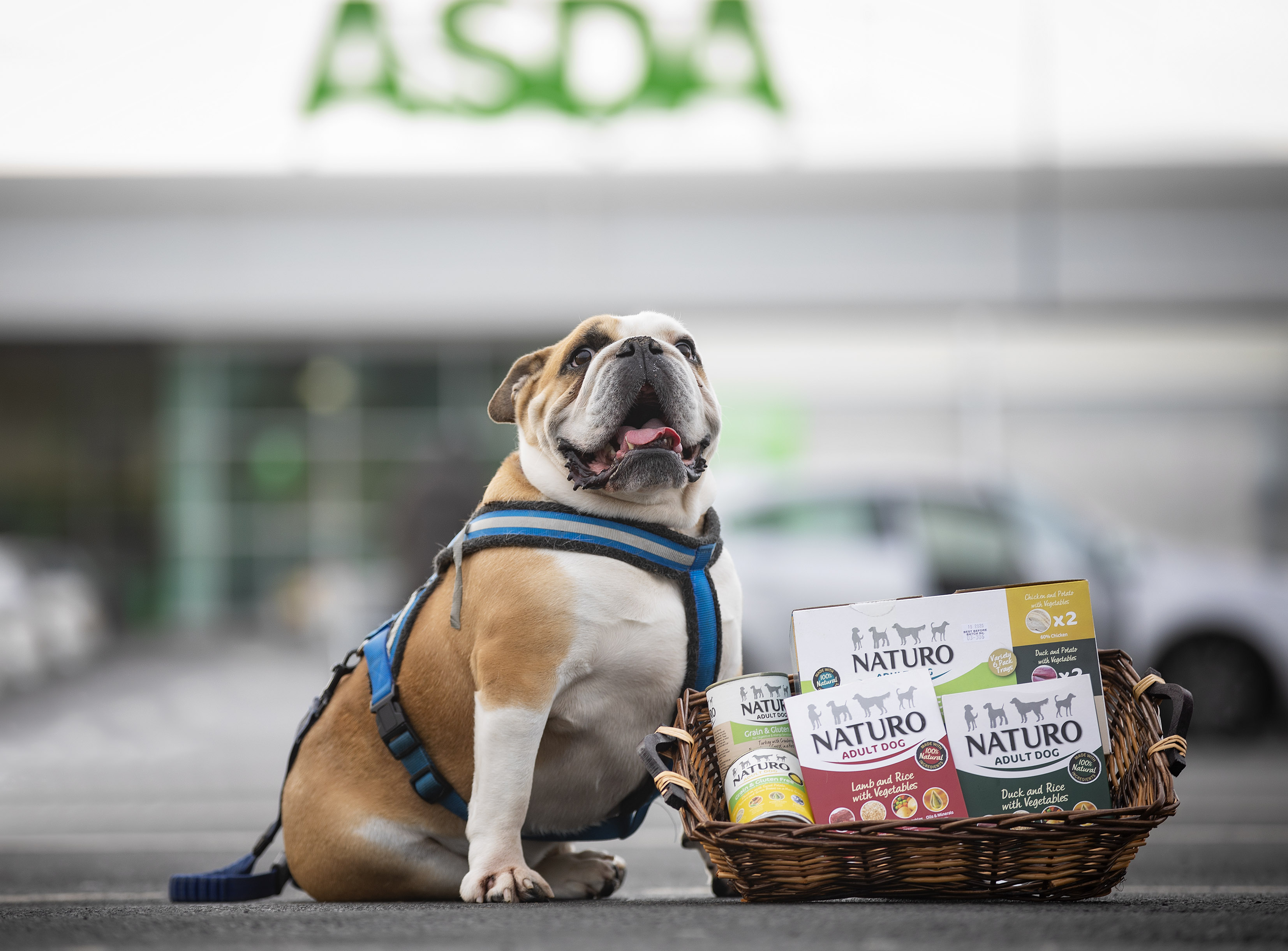 Best Dog Collars 2020 Naturo range goes from strength to strength in Asda Stores